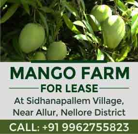 Mango Farm for Lease