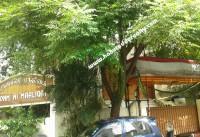 Chennai Real Estate Properties Mixed-Commercial for Rent at Kodambakkam